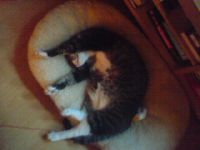 Kann zu jeder Tages- und Nachtzeit schlafen: Felix!